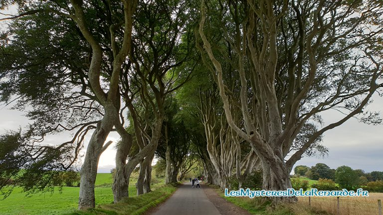 The Dark Hedges : Merveille de l'Irlande du Nord, Game of Thrones, Grey Lady et Halloween